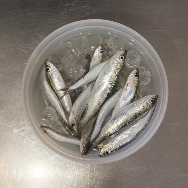 1. Pon las sardinas en hielo un par de minutos
